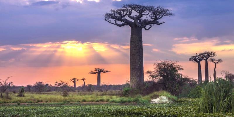 Fakta Tentang Madagaskar
